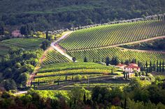 Tuscany Vineyards | Stock image of 'Chianti vineyard landscape in Tuscany, Italy'