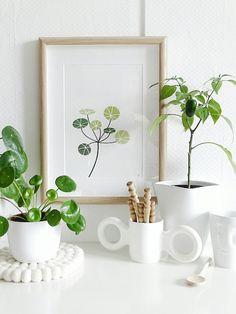 Auf der Mammilade|n-Seite des Lebens: Taler, Taler, du musst wandern | Über Glückstaler, Lieblingspflanzen, botanische Rundreisen, meine Pilea, ihre Ableger & Pflegetipps