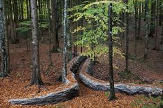Storybook-Style Land Art Scattered Across a Forest in Italy