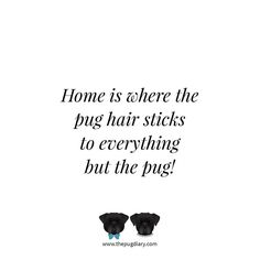 Try and find a spot in the house where there is no pug hair! #thepugdiary