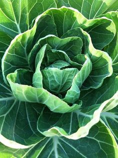 The loveliness of nature and the lowly cabbage. Fruit And Veg, Fruits And Vegetables, Green Veggies, World Of Color, Color Of Life, Go Green, Green Colors, Colours, Terra Verde