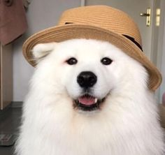 Fee the cuteness on a scale of maya polarbear Fee the cut. - Dogs and Puppies - Fluffy Dogs, Fluffy Animals, Cute Baby Animals, Cute Dogs Breeds, Cute Dogs And Puppies, Dog Anatomy, Anatomy Organs, Samoyed Dogs, Puggle Puppies