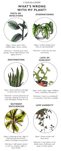 Keep Your Indoor Plants Alive With This Valuable Information! - The Cottage Market Keep Your Indoor Plants Alive With This Valuable Information! - The Cottage Market Container Gardening, Gardening Tips, Organic Gardening, Indoor Gardening, Gardening Services, Gardening Books, Vintage Gardening, Kitchen Gardening, Organic Plants