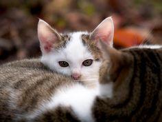 母猫にくるまった子猫| ウーマンエキサイト みんなの投稿
