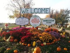 10+ Best Pumpkin Patches to Visit This Fall 2021 (with Photos) – Trips To Discover Great Pumpkin Farm, The Great Pumpkin Patch, Pumpkin Patch Farm, Pumpkin Patch Birthday, Best Pumpkin Patches, Diy Pumpkin, Pumpkin Cake Pops, Pumpkin Patch Pictures, Pumpkin Games