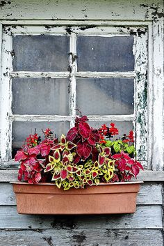 Window Box with coleus