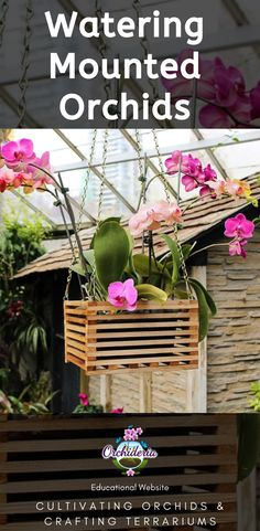 Watering a Mounted Orchid: Everything You Need to Know Mounted orchids will dry out much faster than Outdoor Gardens, Indoor Gardening, Modern Greenhouses, Indoor Orchids, Retaining Water, Build A Greenhouse, Growing Orchids, How To Attract Hummingbirds, Orchid Care