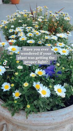 Shade Plants, Air Plants, Garden Plants, Indoor Plants, House Plants, Herb Garden, Growing Gardens, Farm Gardens, Garden Projects