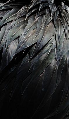 Black Plumage by BlackCynnamon on deviantArt