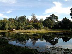 Laguna de lotos del Parque Saval en Valdivia. Foto de Catalina Agüero.