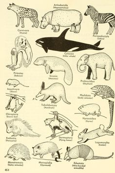 Examples for each of several orders of animals.  College zoology. 1959.