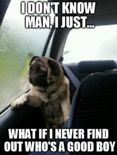 Funny pictures about Introspective pug questions his life. Oh, and cool pics about Introspective pug questions his life. Also, Introspective pug questions his life. Pug Meme, Funny Dog Memes, Funny Dogs, Funny Animals, Dog Humor, Pug Jokes, Farts Funny, Funniest Memes, Cute Animals With Funny Captions