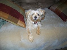 My Bailey