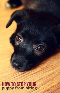1000 Ideas About Puppy Biting On Pinterest Dog Training