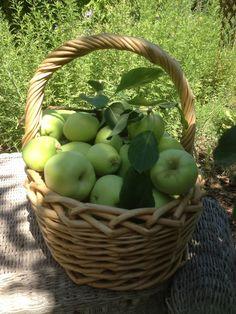 The Simple Farm {blog} Farm apples.