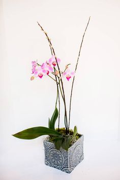 A purple double orchid plant in a unique, decorative vase. From Flowers by Emily via @Bloompop