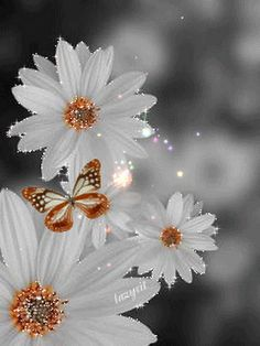 Butterfly and flowers Flowers Gif, My Flower, Flower Power, Beautiful Flowers, White Flowers, Images Gif, Gif Pictures, Gif Bonito, Beau Gif