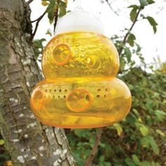 Wasp traps diy sweepstakes