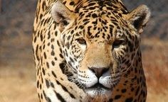 How Abusive Animal Attractions Drive the Need for Exotic Cat Sanctuaries