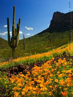 Picacho Peak - camping this presidents day weekend, kick off to wildflower season