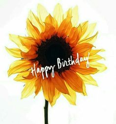 Best Birthday Quotes : Its your BIRTHDAY week! We u so much! Happy Birthday Wishes Cards, Happy Birthday Meme, Happy Birthday Pictures, Birthday Blessings, Birthday Wishes Quotes, Happy Wishes, Birthday Week, Birthday Clips, It's Your Birthday