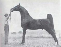 The great Kalarama Rex with his life-long handler, Joe Walker.
