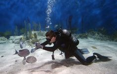 While nothing can truly compare to the thrill of real open water ocean diving, check out these 3 amazing aquariums you can dive! http://aquaviews.net/scuba-dive-destinations/aquariums-you-can-dive/