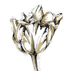 Ethan Harper Small Tulip Sketch I