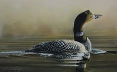 47 best loon images on pinterest bird paintings birds and ducks