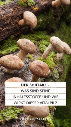 Welche Inhaltsstoffe hat der Shiitake und wie hoch ist der tatsächliche Gehalt von seinen Inhaltsstoffen. Shiitake, Tricks, Stuffed Mushrooms, Vegetables, Blog, Natural Home Remedies, Natural Medicine, Stuff Mushrooms, Vegetable Recipes