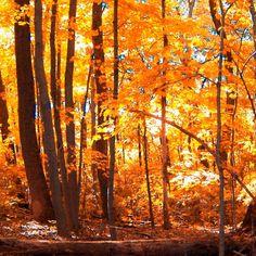 #Autumn autumn autumn