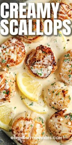 This Scallops in Lemon Cream recipe is so easy to make, but looks so elegant! Creamy, white wine sauce with lemon-garlic seasonings is cooked with scallops to create this delicious dish! #spendwithpennies #creamyscallops #recipe #scallops #appetizer #stovetop #savory #creamy #easy #best Best Scallop Recipe, Scallop Recipes, Lemon Scallops Recipe, Fish Recipes, Seafood Recipes, Dinner Recipes, Cooking Recipes, Fish Dishes, Tasty Dishes