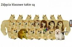 Very Funny Memes, Wtf Funny, Hilarious, Class Pictures, Funny Pictures, Polish Memes, Past Tens, Shrek, Avengers