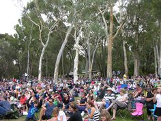 What better way to enjoy the music of Summer Sounds than with friends and family among the gum trees on the Australian National Botanic Gardens Eucalypt Lawn.