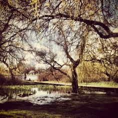 Trout Lake, Vancouver, BC  Iphoneography by NikNaz K.