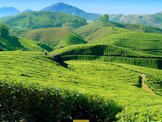 Kerala tea plantations