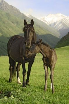 Mare and foal against a stunning backdrop!