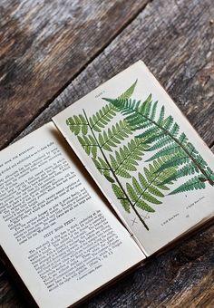 Katniss Everdeen Hairstyle Herb Book Games Peter Mellark Pinterest: @shreysomaiya