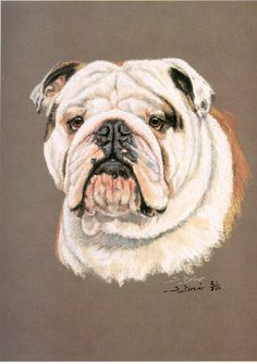 Bulldog Art Prints Sue Driver Henry Wilkinaon Engraving Vic Bearcroft