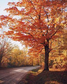 Orange leaves of Autumn Autumn Scenes, Autumn Aesthetic, Autumn Cozy, Seasons Of The Year, Autumn Inspiration, Fall Season, Fall Halloween, Autumn Leaves, Fall Trees