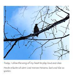 KLANG  -  von Steffi am 2014-02-04 auf #KokopelliBeeFree Media  -  Tags:  #KBFPhotography  #Singvögel