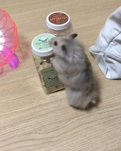 Very cute animals and reactions. We love to make people happy with showing the most beautiful furry babies we have! Funny Hamsters, Cute Ferrets, Cute Cats, Cute Animal Videos, Cute Animal Pictures, Cute Little Animals, Cute Funny Animals, Animals And Pets, Nature Animals