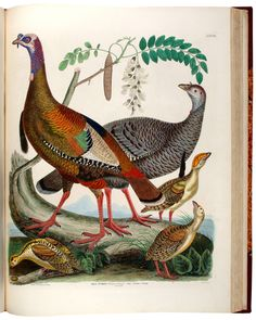 Illustrations of the American Ornithology of Alexander Wilson and Charles Lucien Bonaparte