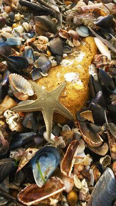 Beach of Nea Chili, Alexandroupolis, Evros, Greece . Chili, Greece, Beach, Animals, Animales, Chile, The Beach, Animaux, Chilis