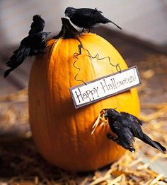 """Wire fake blackbirds onto a pumpkin """"birdhouse"""" and hang a Halloween greeting from a nail. After Halloween, swap the blackbirds out for cardinals, and add a blessing sign to transform from Halloween to Thanksgiving. duel purpose crafts I love! Fröhliches Halloween, Outdoor Halloween, Holidays Halloween, Halloween Pumpkins, Halloween Tricks, Halloween Images, Halloween Patterns, Pumpkin Art, Pumpkin Carving"""