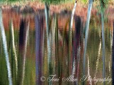 Reflection From the collection 'Reflections on the General's Pond' by Toni Allen. High quality prints available in a variety of sizes. Create unique wall art for your home or office. Unique Wall Art, Abstract Photography, Pond, Reflection, Create, Natural, Prints, Poster, Water Pond