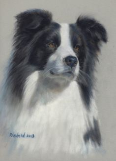 Pastel Portrait of Border Collie.