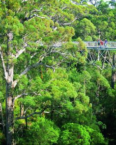 Denmark Walpole Wilderness forests and ocean coastline scenic tours  West of Denmark and east of Walpole on the Southern Ocean Coast of Western Australia in the heart of the Walpole Wilderness.