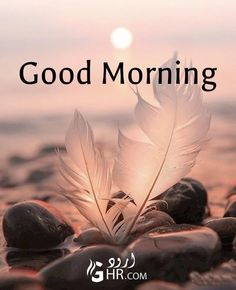 Good Morning Gift, Good Morning In Hindi, Good Morning Nature, Good Morning Thursday, Good Morning Flowers, Good Morning Greetings, Gd Morning, Morning Quotes Images, Good Morning Images Hd