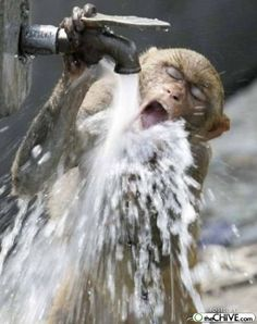 50 Cute And Funny Pictures Of Thirsty Animals - Tail and Fur Funny Animal Images, Funny Animals, Cute Animals, Animals Images, Funny Images, Bing Images, Primates, Monkey Pictures, Thirsty Thursday